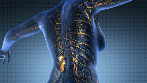 loop science anatomy scan of woman limphatic system glowing with yellow Footage