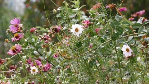 Garden Flowers Rain 4K Footage