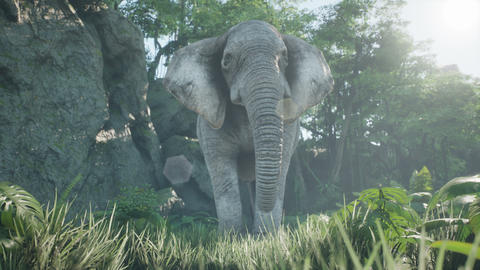 A gray African elephant walks through the green jungle in the early morning. Animation for animals, Animation