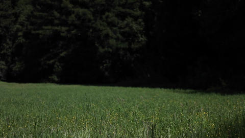 A young woman runs through a grassy field carrying a... Stock Video Footage