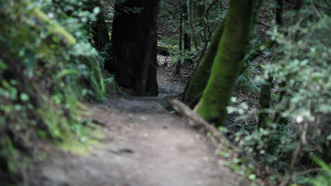 A woman runs through a wooded area Stock Video Footage