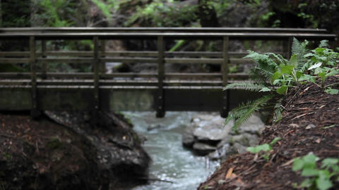 A woman runs across a bridge over a stream in a wooded area Footage
