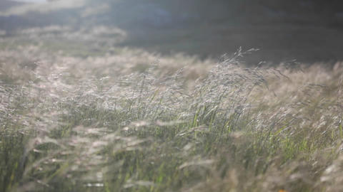 A continuous gust of wind blows across a grassy field Stock Video Footage