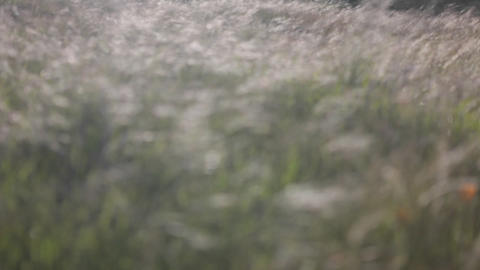 A wind-blown field of weeds gradually comes into focus,... Stock Video Footage