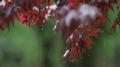 Leaves and branches are getting rained on Stock Video Footage