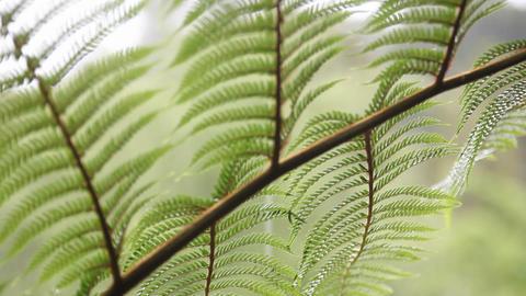 Light sunlight falls upon a fern Stock Video Footage