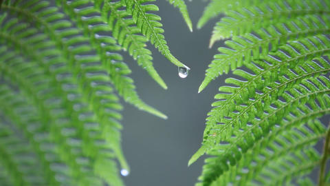 Close-up of fern getting rained on Stock Video Footage