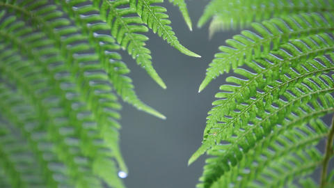 Close-up of fern getting rained on Footage