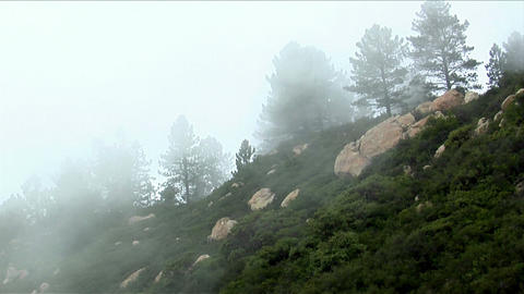 Fog rolls over a wooded mountainside Footage