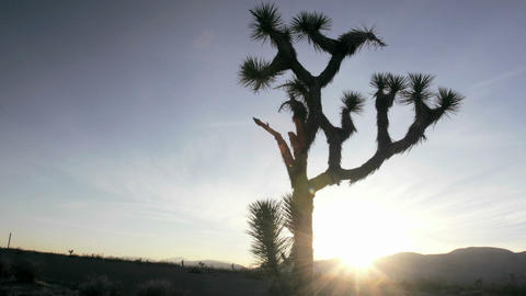 A cactus grows in the desert Stock Video Footage