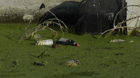 Garbage floats in a waterway full of algae Footage