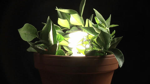 A compact-fluorescent light bulb illuminates a potted plant Stock Video Footage