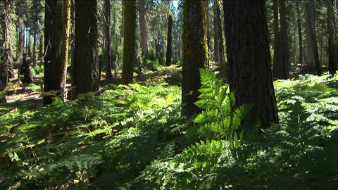 Ferns grow near trees in the forest Stock Video Footage