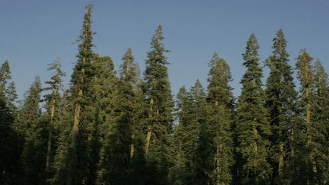 Shadows stretch over a stand of trees Stock Video Footage