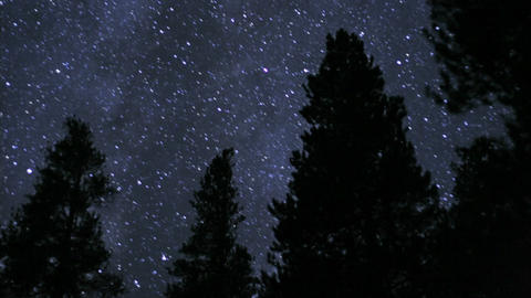 Stars sparkle over silhouetted trees Footage