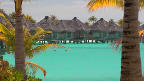 Tahitian palm trees gently blow in the wind with... Stock Video Footage