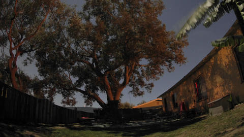 Zoom out overnight time lapse of full moon over an oak... Stock Video Footage