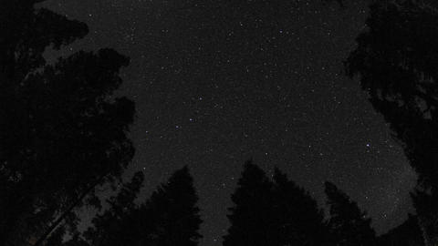 Day to night startrails above a forest in Kings Canyon... Stock Video Footage