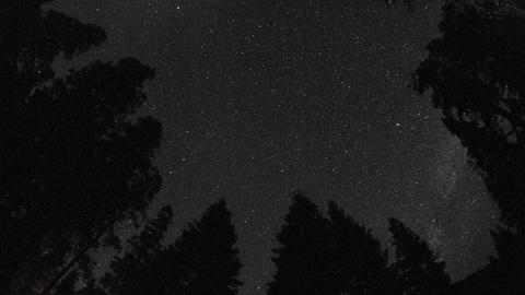 Day to night startrails above a forest in Kings Canyon National Park, California Footage