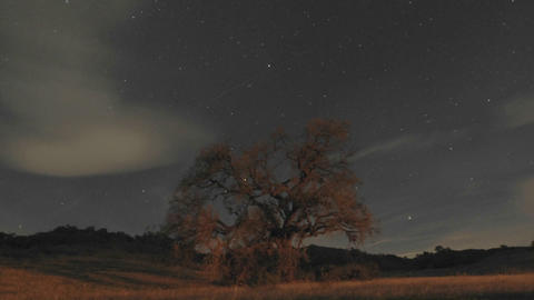 Night time lapse of startrails and clouds above an oak... Stock Video Footage