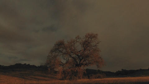 Night time lapse of startrails and clouds above an oak tree in Oak View, California Footage