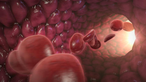 Traveling Blood Cells Animation