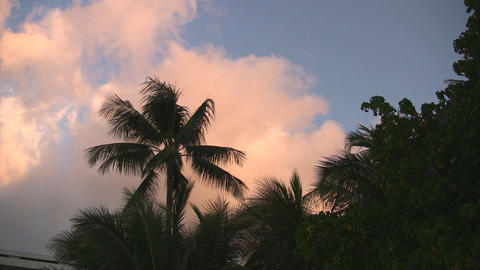 Palm trees and sky01 Stock Video Footage