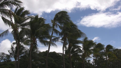 Palm trees and sky02 Stock Video Footage
