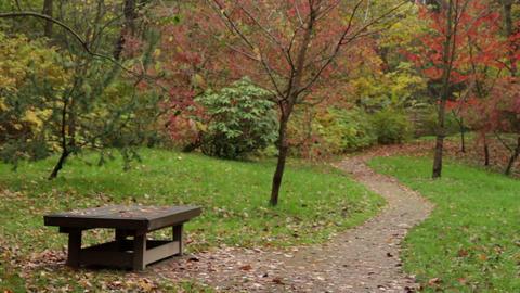 autumn garden Stock Video Footage