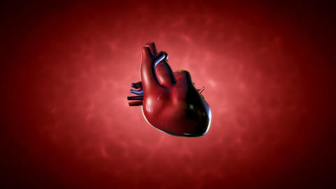 Human Heart Stock Video Footage