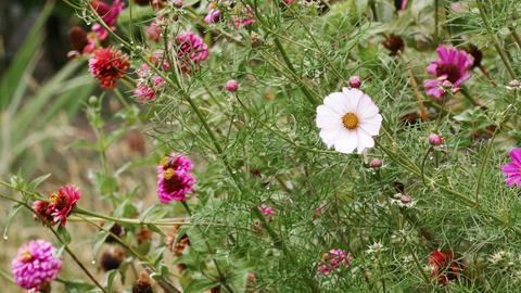 Garden Flowers Rain Footage