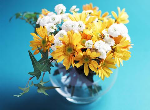 Studio shot of daisy flowers