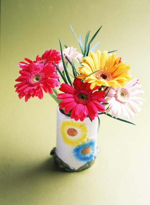 Studio shot of daisy flowers フォト
