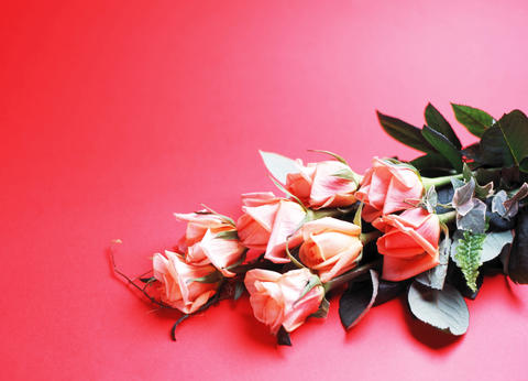 Studio shot of roses フォト