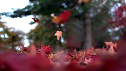 Slow Mo Autumn Leaves Floating to the Ground Footage