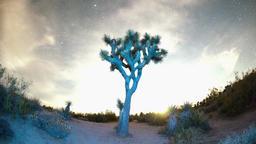 Wide Sky Timelapse Above Joshua Tree Footage