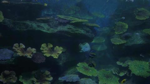 Fish swimming in oceanarium Footage