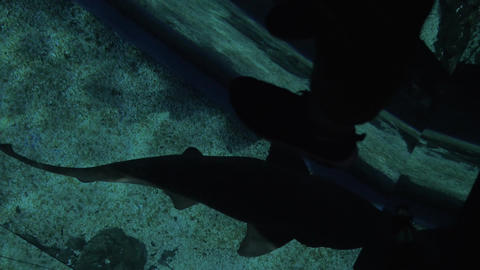 Glass floor and swimming small shark in ocenanarium Footage