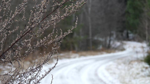 Slow motion of grass and snowy macadam with falling snow Live Action