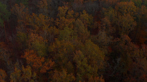 Wonderful mixed Autumn Colors, Green Red and Orange vivid colored Forest, Aerial Live Action