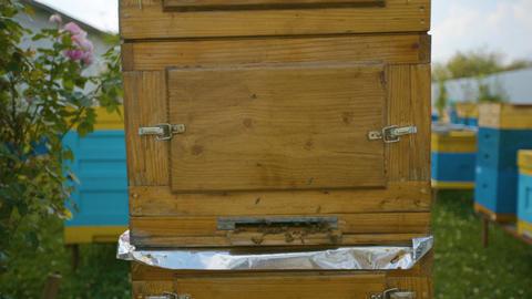 Unique wooden beehive. Industrial beekeeping Live Action