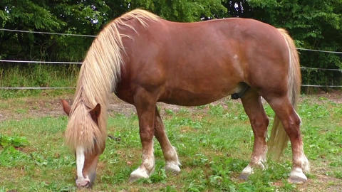 Horse in meadow Footage