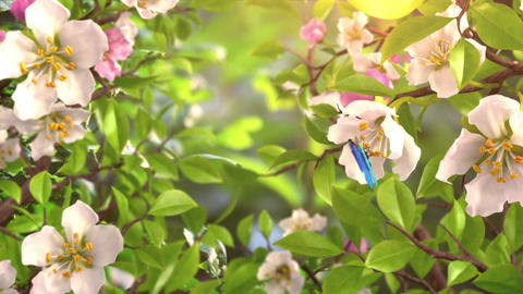Intro with Butterflies and Blossoming Flowers CG動画素材