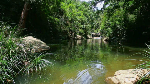 Calm River by Tropical Plants Transparent Water under Sunlight Footage