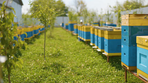 Review of bee hives in the apiary. Industrial beekeeping in Sunny Day Live Action