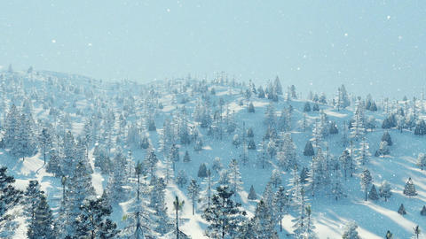 Winter fir forest at snowfall aerial view Footage