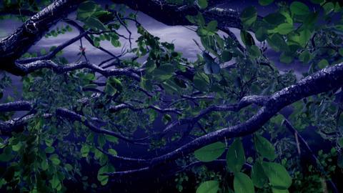 Tropical Rains Animation