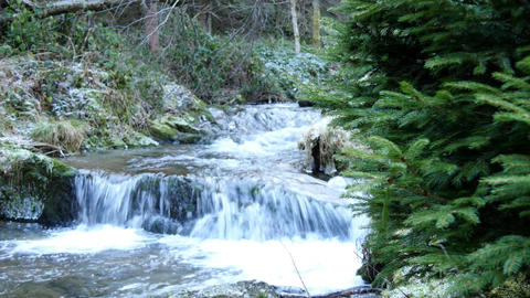 Cold water of mountain stream in winter time with pine tree in and out of focus Footage
