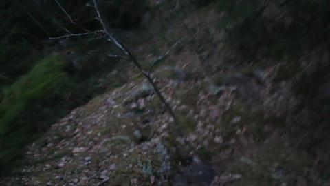 Evening Walk through ancient glacial moraine 4 Footage