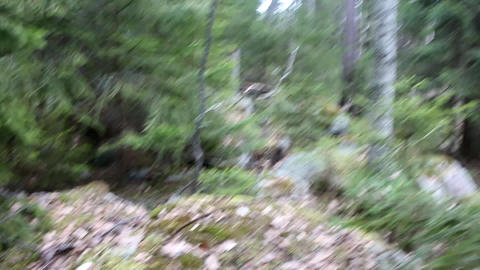 Daily Walk through ancient glacial moraine 1 Footage